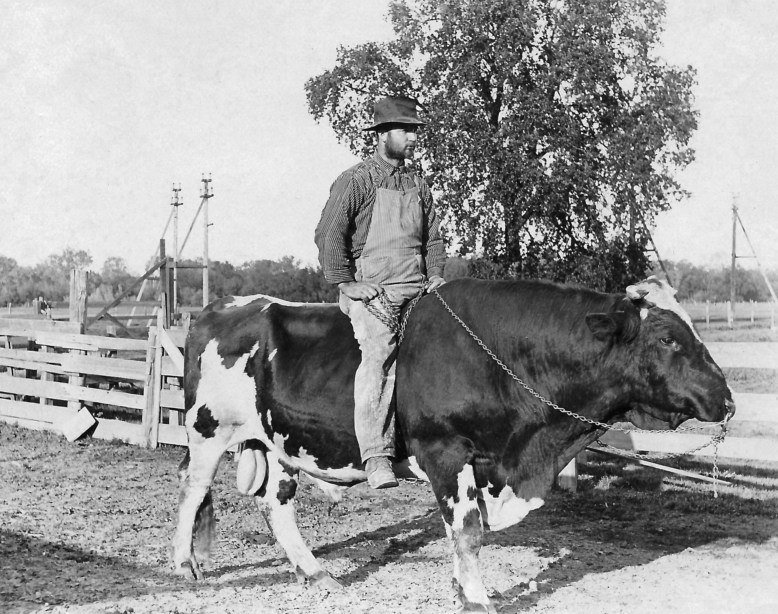 Bull Rider BW